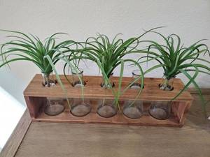 Wooden Tray with 5 Glass Vases